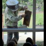Beehive Photo